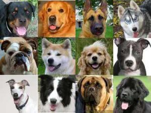 Генетика И Разведение Собак